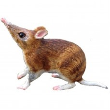 Bandicoot Replica - Small