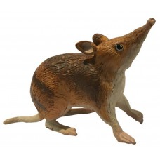 Eastern Barred Bandicoot - Large